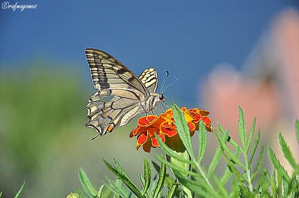 Een vlinder aan het Gardameer