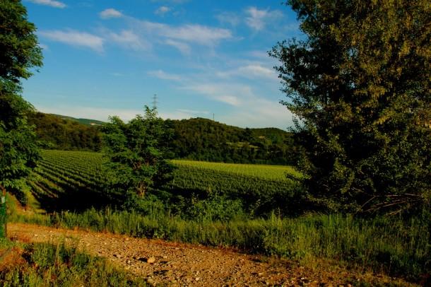Wakker worden met zicht op de wijngaarden
