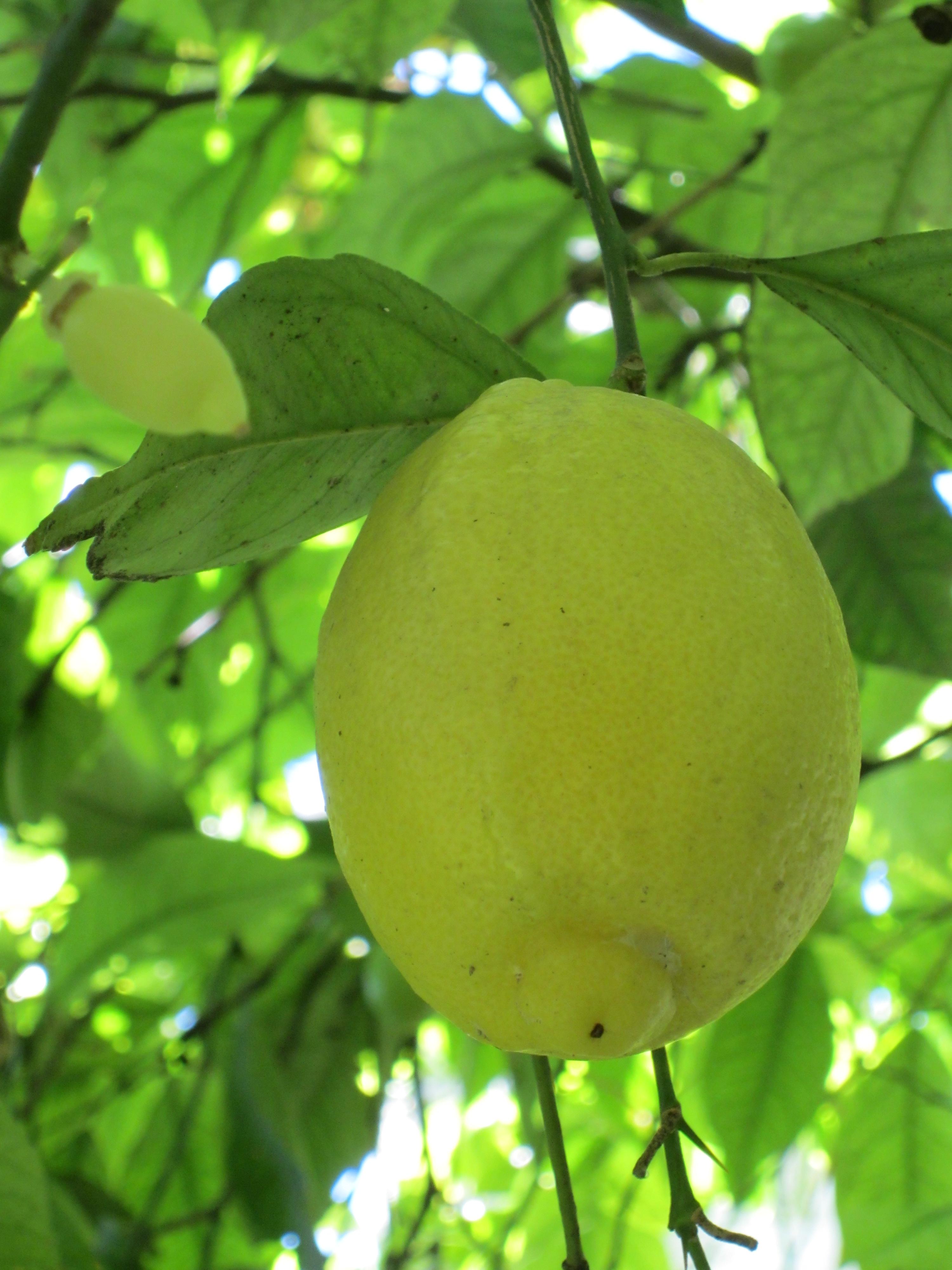 Limonaia in Gargnano