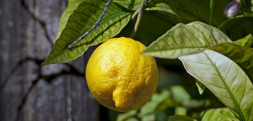 VitaLake citroen