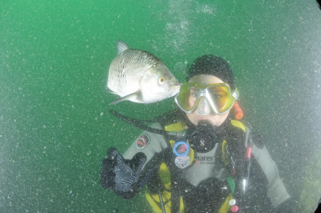 Een prachtige onderwater foto met een vis in het Gardameer