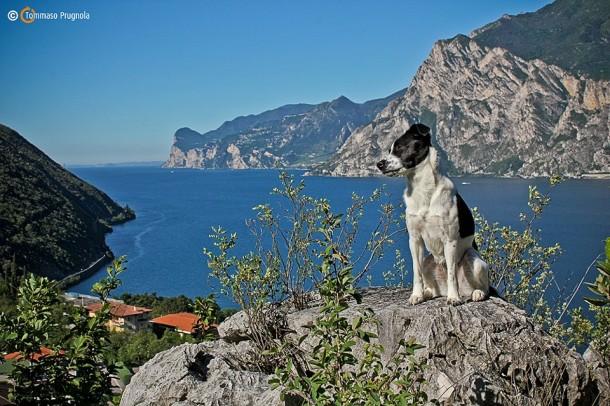 Gardameer hond